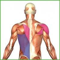 tonic-vs-phasic-muscles